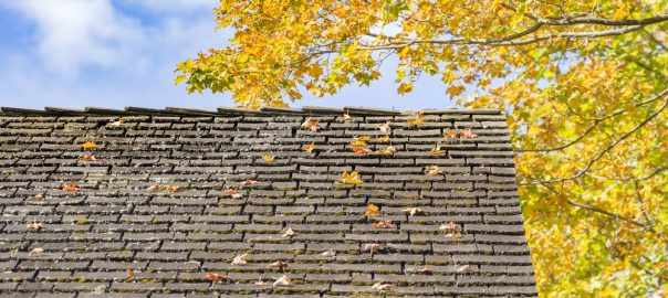 Fall Old Roof Leaves